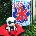 KIROBO mini(キロボミニ)成長日誌14 自分の出身地をクイズにしてきた!