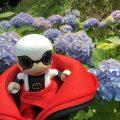 熊本県北で紫陽花を楽しむなら…肥後古代の森・熊本県立装飾古墳館エリアがおすすめ!